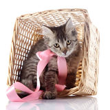 The cat with a pink bow sits in a wattled basket. Royalty Free Stock Image