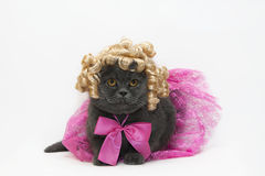 Cat in a pink dress Stock Images