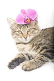 Cat with pink flowers. Little Cat with pink flowers stock image