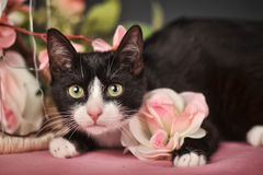 Cat with pink flowers royalty free stock photography