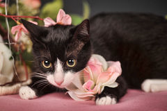 Cat with pink flowers Royalty Free Stock Photo