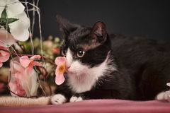 Cat with pink flowers Royalty Free Stock Images
