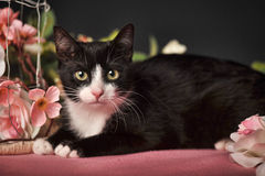 Cat with pink flowers Stock Photography