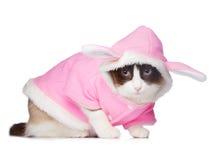Cat in pink rabbit costume Stock Photo