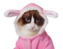 Cat in pink rabbit costume isolated Royalty Free Stock Image