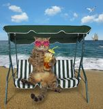 Cat with cold tea sits on a swing bench stock photo