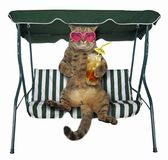 Cat with cold tea is on a swing bench stock photography