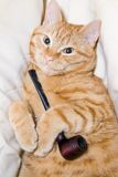 Cat and pipe royalty free stock photos