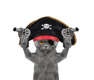 Cat in a pirate costume with guns Royalty Free Stock Photos