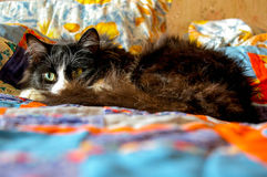 Cat Pixel. Cat lying on the couch and anxiously watching you Royalty Free Stock Photos