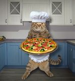Cat with pizza in kitchen. The cat chef holds a tray with a pizza in the kitchen Stock Illustration