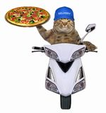 Cat with pizza on the scooter royalty free stock photos