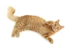 Cat plaful stock photo