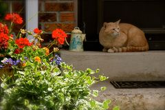 Cat, Plant, Flower, Small To Medium Sized Cats Stock Image