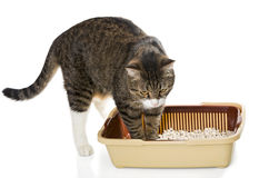 Cat and plastic toilet Stock Images