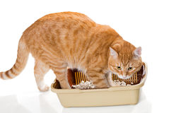 Cat and plastic toilet Royalty Free Stock Photo