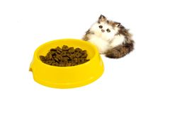 Cat plate with toy kitten Stock Photography