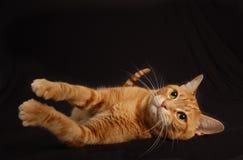 Cat Play 5 Imágenes de archivo libres de regalías