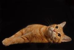 Cat Play 6 Fotos de archivo libres de regalías