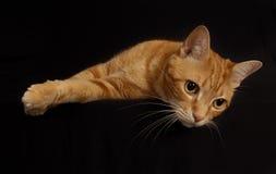 Cat Play 7 Fotos de archivo libres de regalías