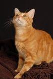 Cat Play 12 Fotos de archivo libres de regalías