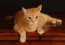 Cat Play 13 Fotos de archivo libres de regalías
