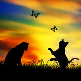 Cat play butterfly Royalty Free Stock Photos