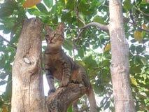 Cat play climb tree Stock Photos