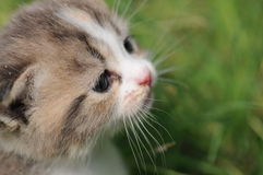 Cat play in grass. A cat play in grass Stock Photo