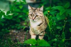 Cat Play In Grass Outdoor juguetona Imagen de archivo libre de regalías