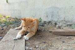 Cat play on ground Stock Photos