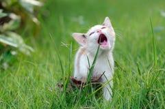 Cat on playground royalty free stock image
