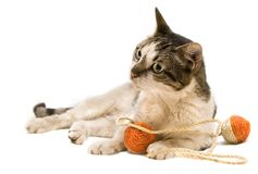 Cat playing. With a straw balls toy Royalty Free Stock Photography