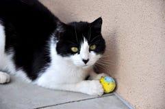 Cat Playing Ball preto e branco Fotografia de Stock