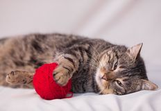 Cat playing with ball of red yarn Royalty Free Stock Photo