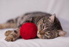 Cat playing with ball of red yarn Royalty Free Stock Photos