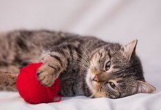 Cat playing with ball of red yarn Stock Images