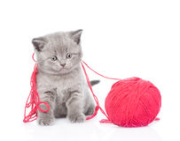 Cat playing with a ball of wool. isolated on white background Royalty Free Stock Images