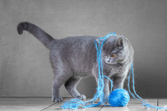 Cat playing with ball of yarn Royalty Free Stock Photography