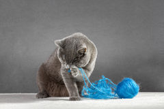 Cat playing with ball of yarn Royalty Free Stock Photo
