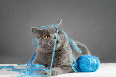 Cat playing with ball of yarn Stock Image