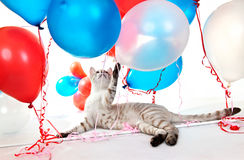 Cat playing with balloons.