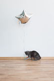 Cat playing with baloon holding the ribbon. Russian Blue Cat. Cat playing with baloon holding the ribbon. Russian Blue Cat Royalty Free Stock Photography