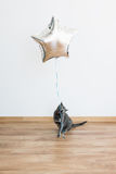 Cat playing with baloon holding the ribbon. Russian Blue Cat. Cat playing with baloon holding the ribbon. Russian Blue Cat Royalty Free Stock Images