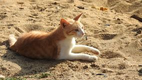 Cat playing on beach stock images