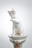 Cat playing Royalty Free Stock Photos
