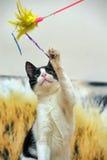 Cat playing Stock Photos