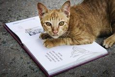Cat Playing Book Concept sans abri Photo libre de droits