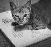 Cat Playing Book Concept senza tetto Fotografia Stock Libera da Diritti