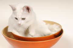 Cat playing in bowls Royalty Free Stock Photos